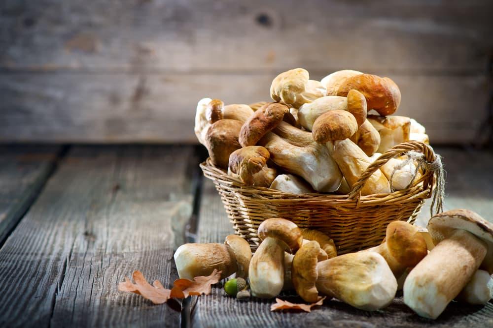 Mushrooms on a table