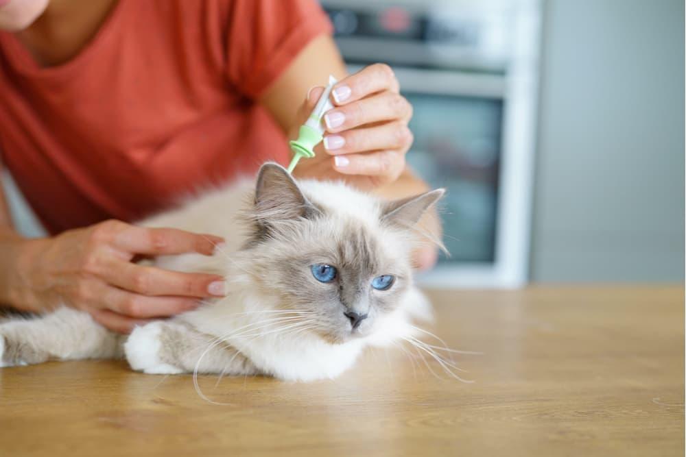 Cat receiving flea prevention medication