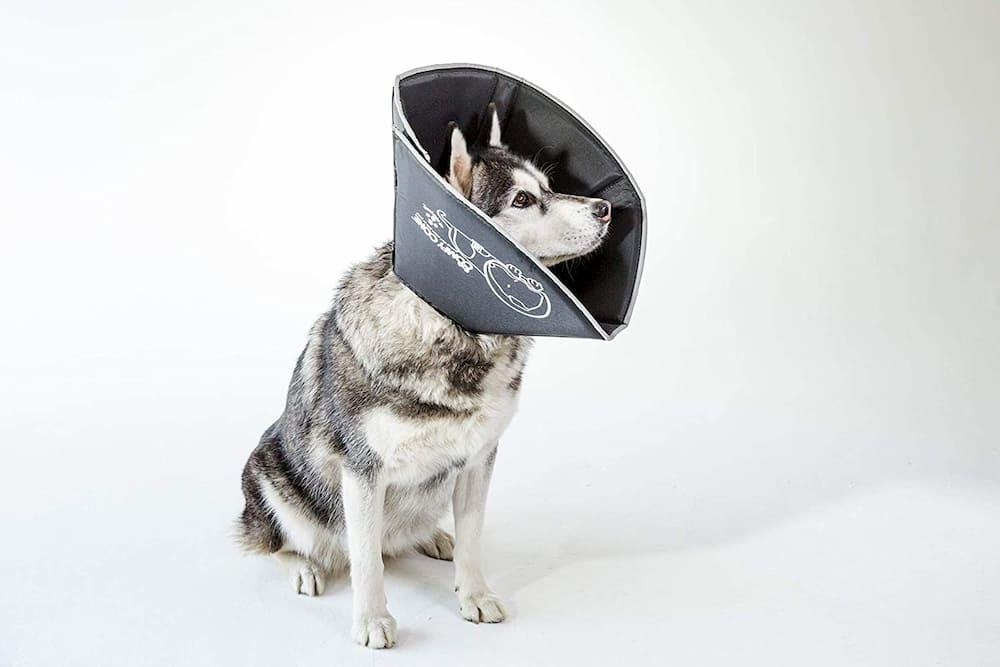 Comfy Cone Flexible Dog Cone
