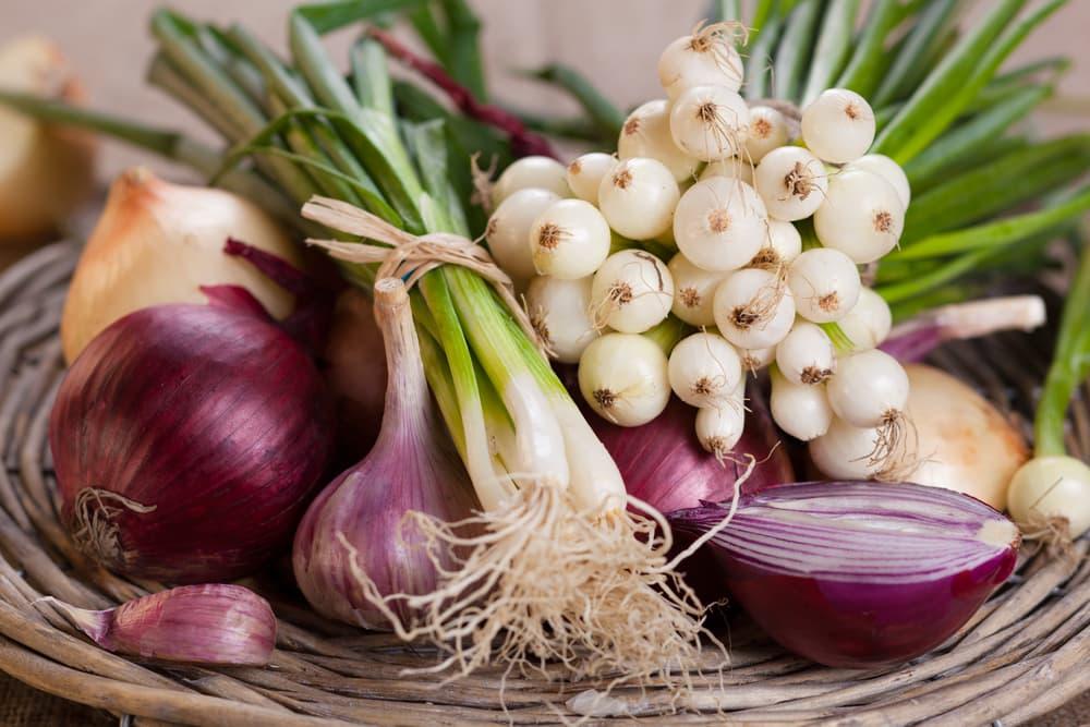 Onions, garlic and leeks