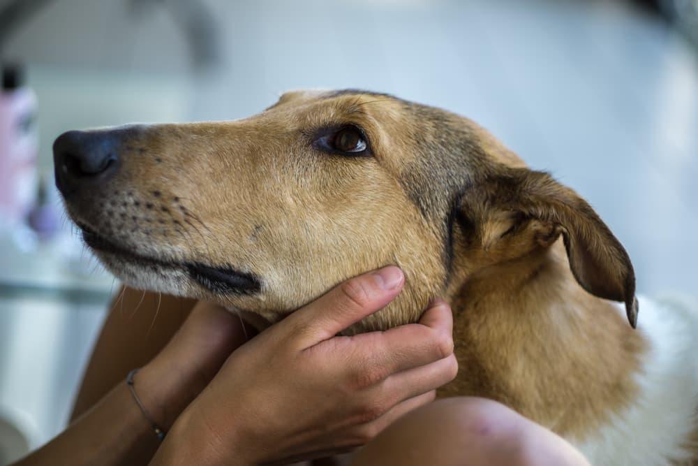 Happy dog being pet under their chin