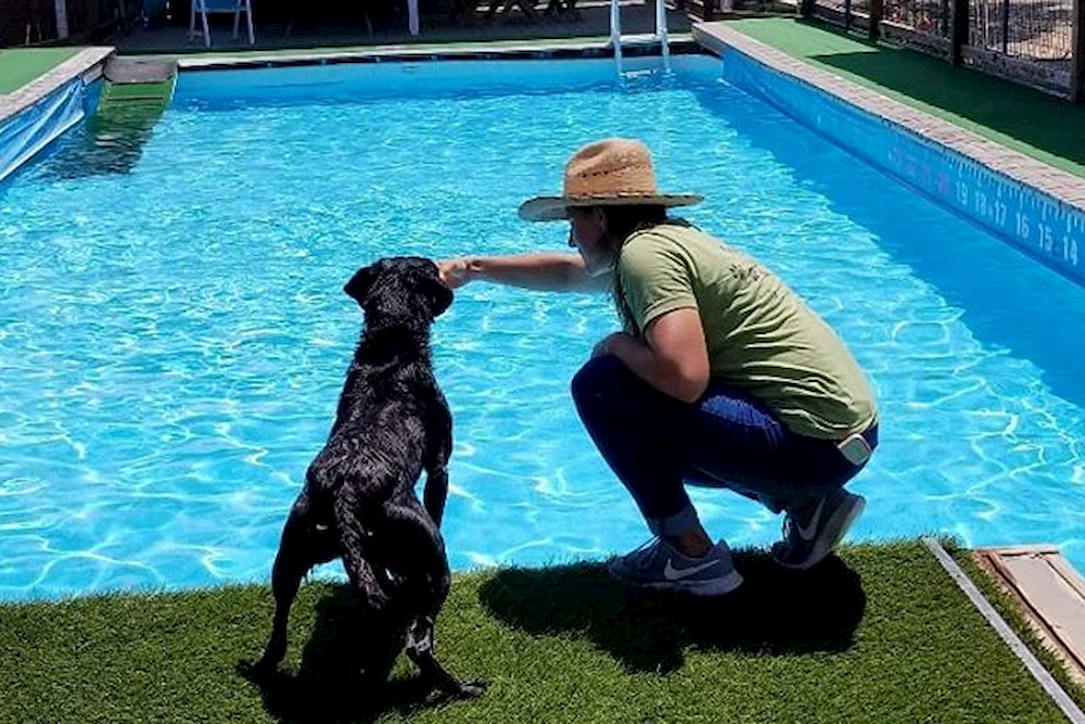 Dog at side of pool with a swimming trainer