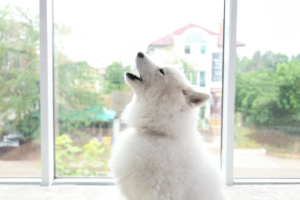 What Do Dogs Think About?