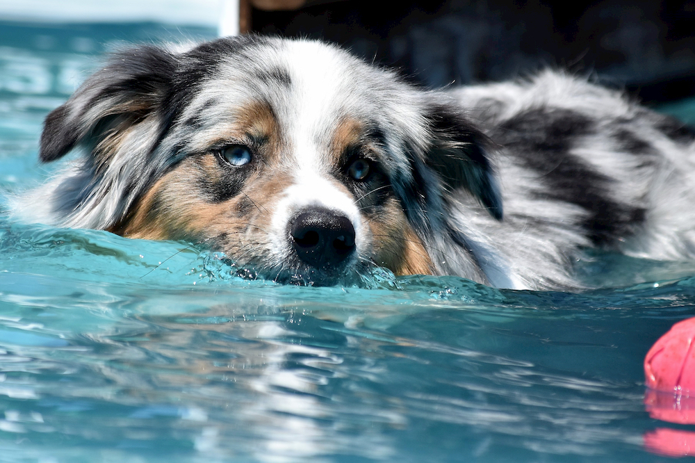 Happy dog swimming in a pool