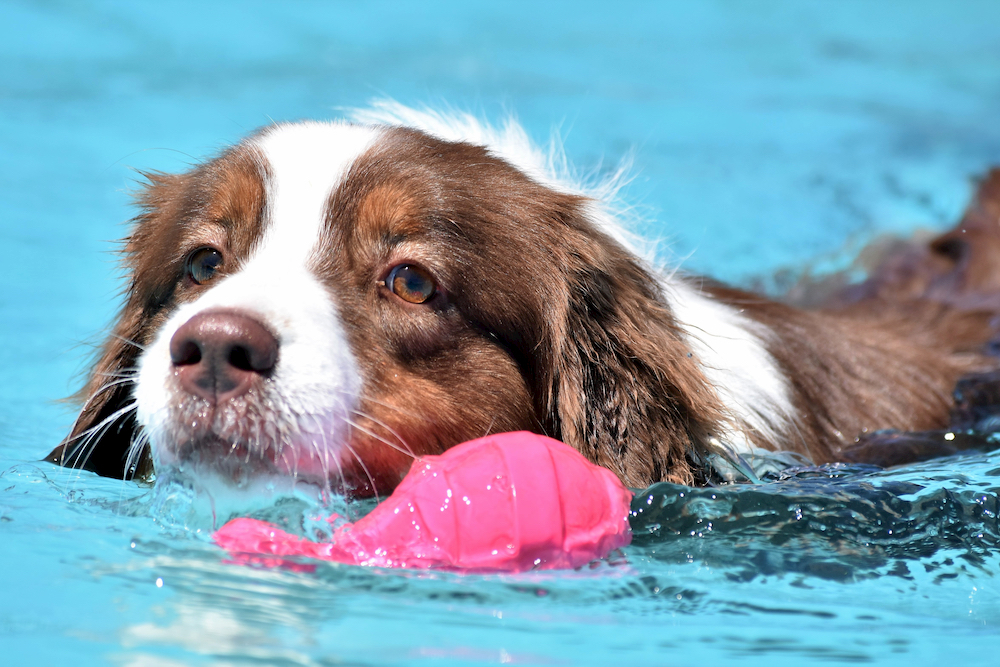 Dog swimming in a pool