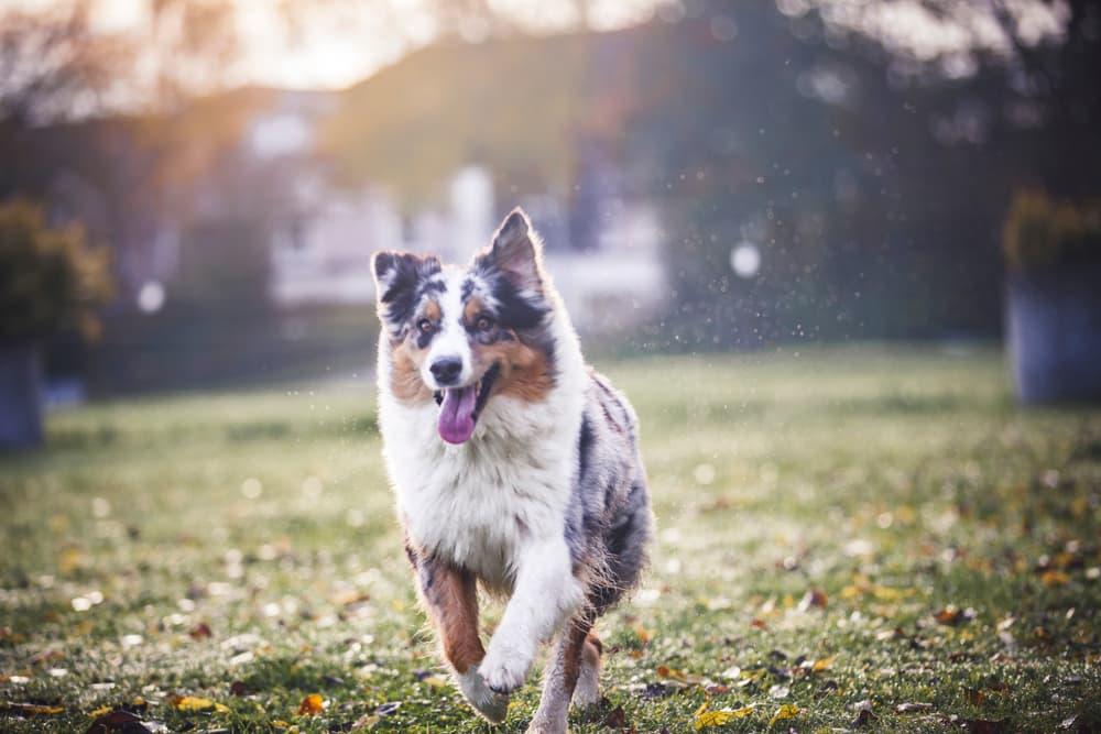 Dog running outdoors
