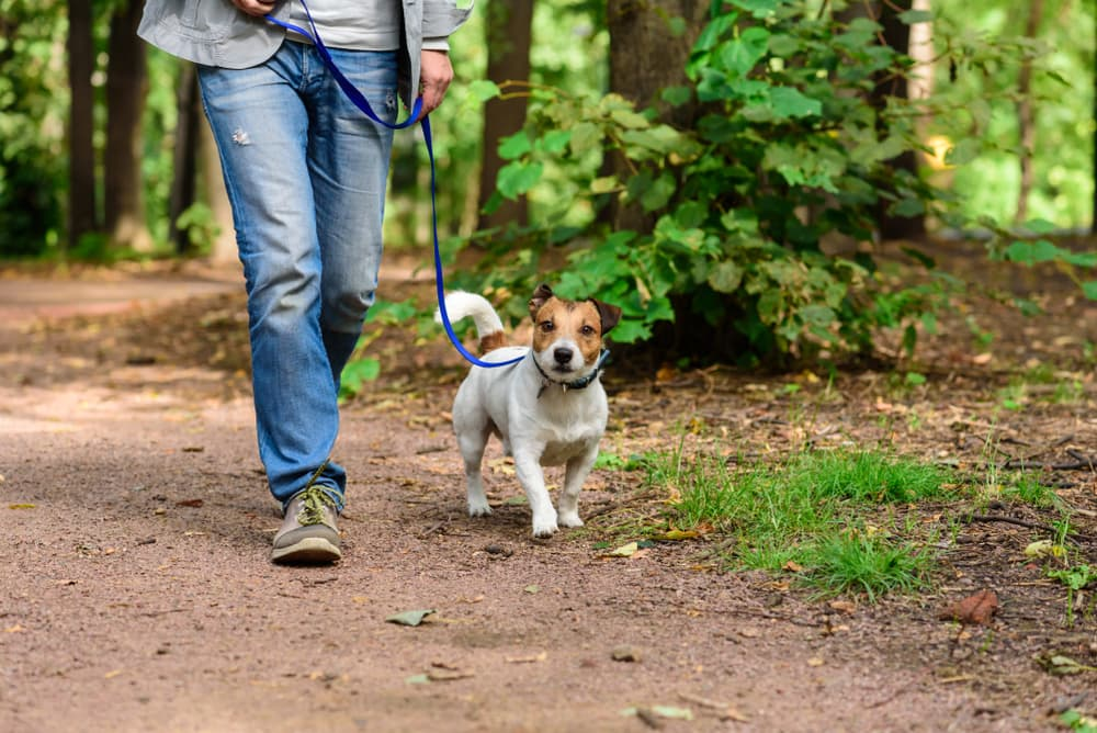 Walking outdoors with dog
