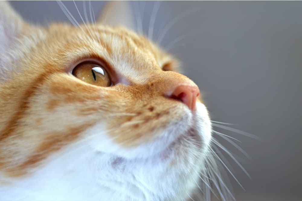 Close up of a little cat's nose