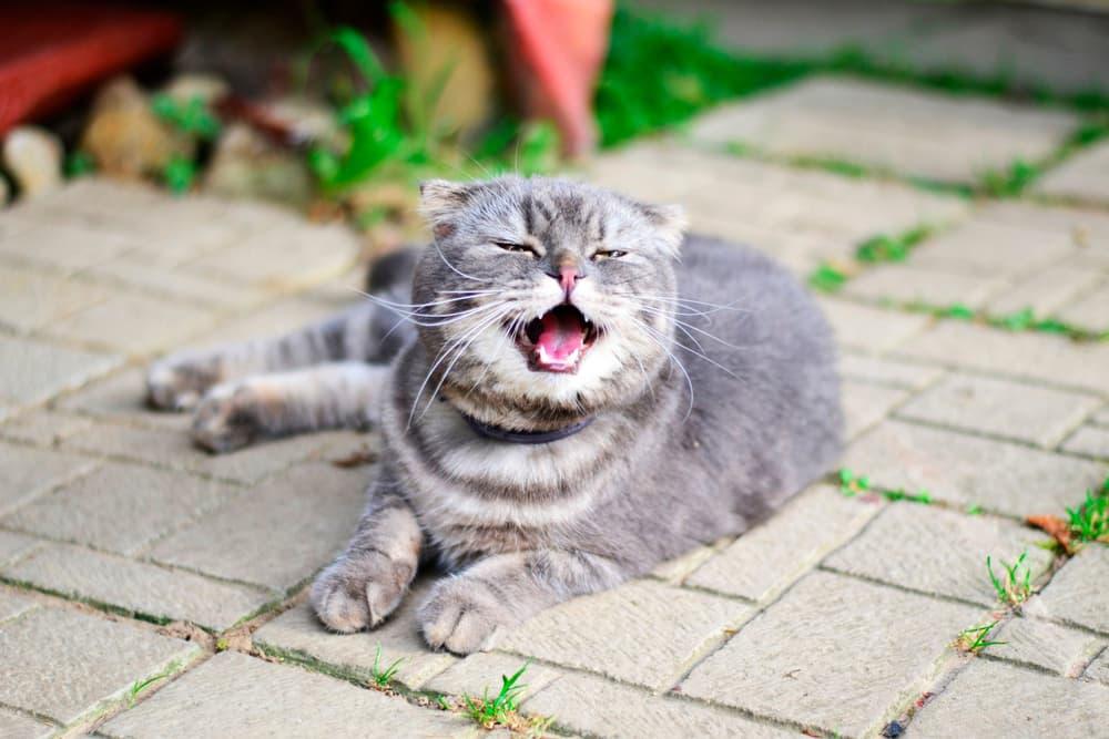 Cat outside sneezing