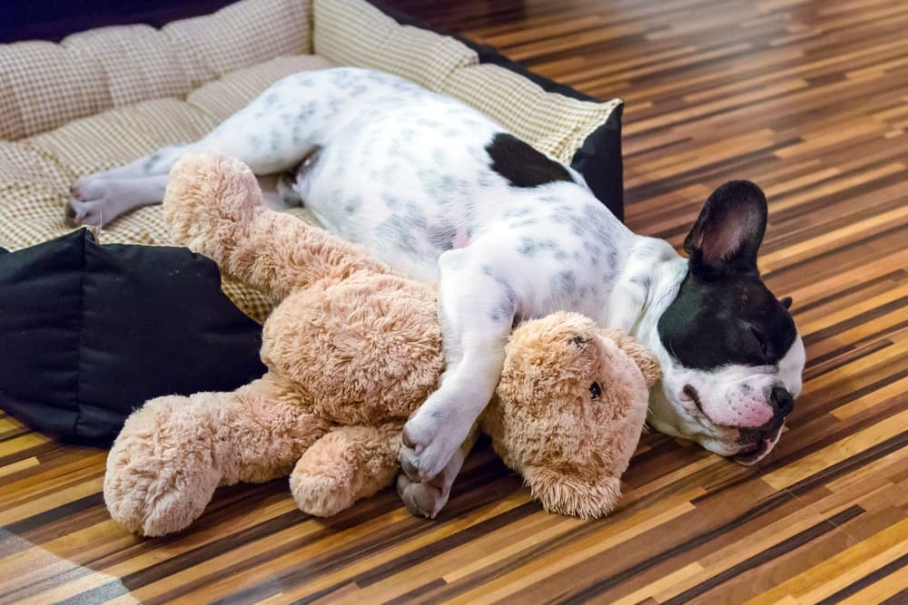 Puppy sleeping in dog bed with toy