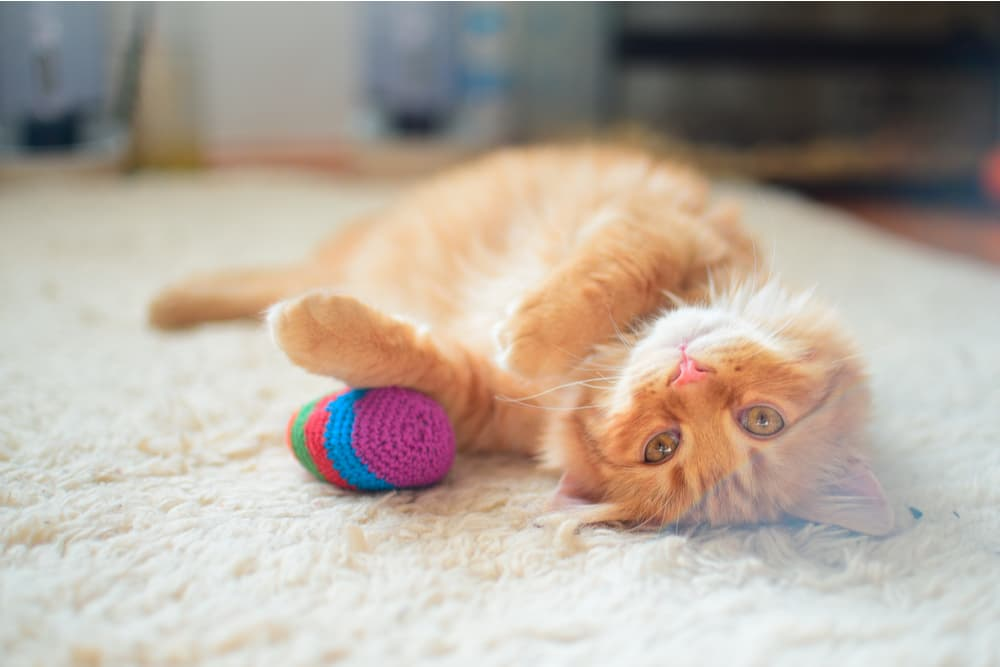 Cat playing with their toy