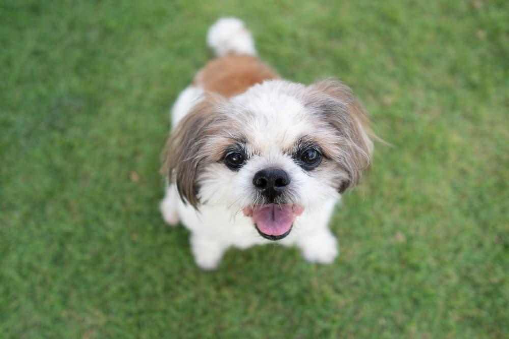 Happy dog sitting in grass