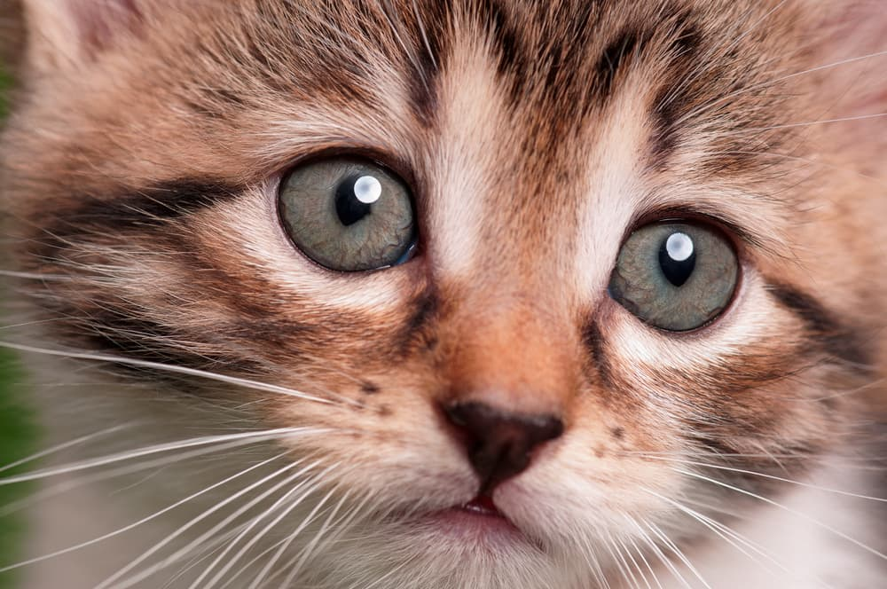 close up of kittens eyes