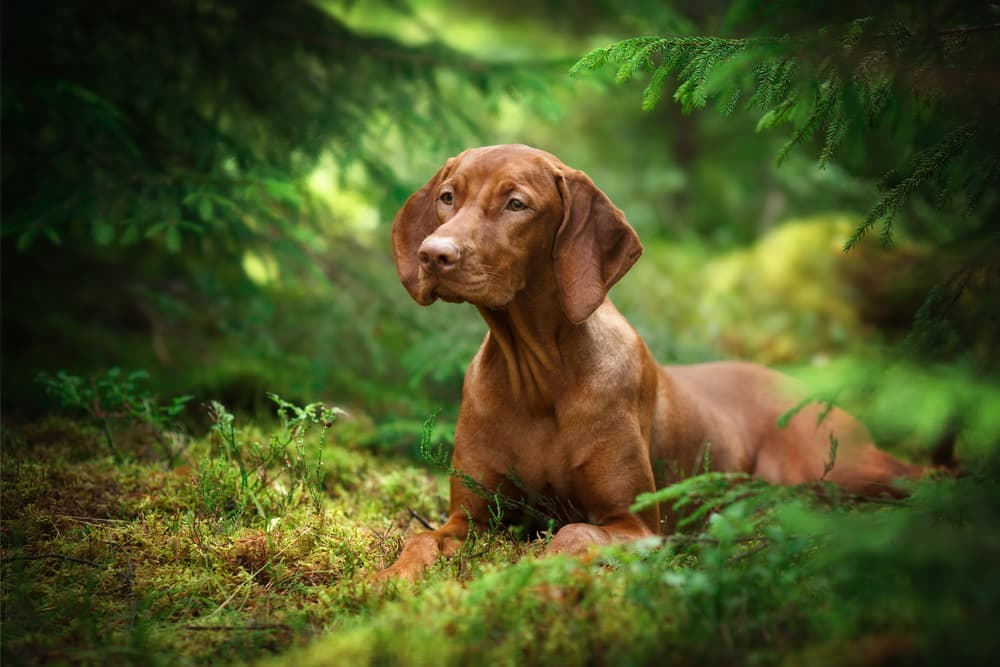 Dog laying on the forest ground