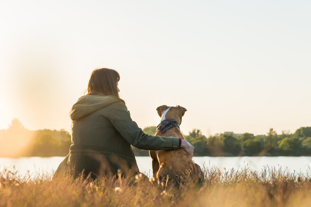 Dog and owner sitting in high grass after walk