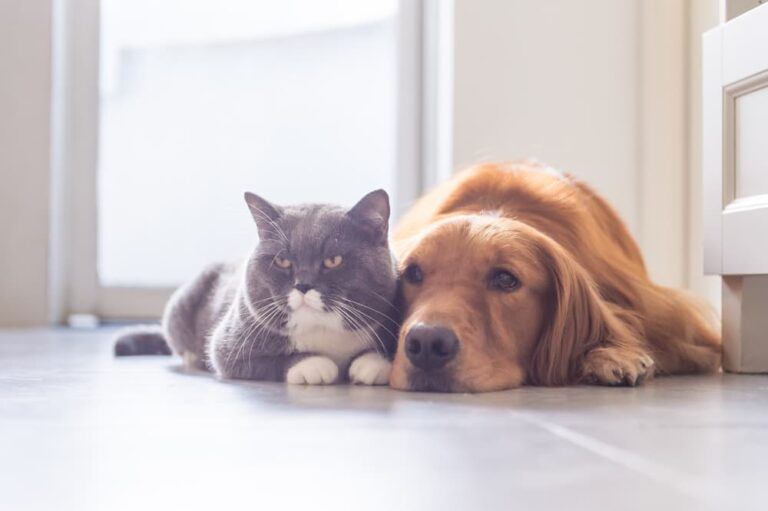 Dog and cat looking bored sitting on the floor
