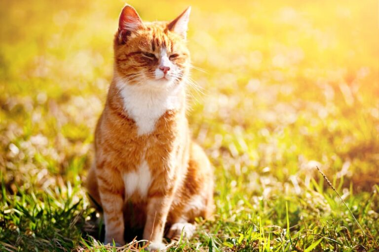 Cat squinting into the sun