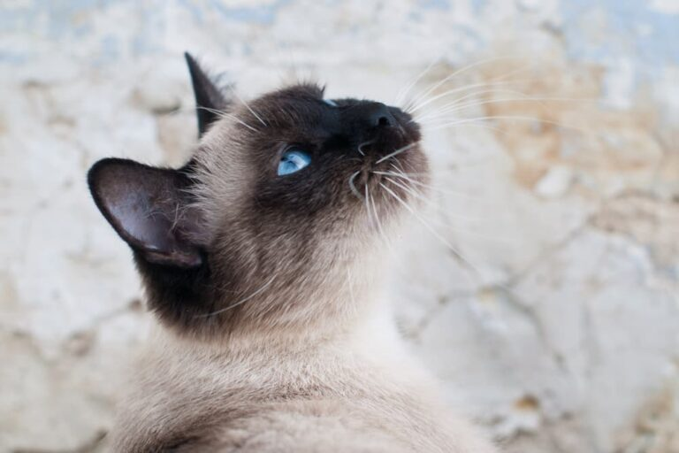 Cat looking up to the sky