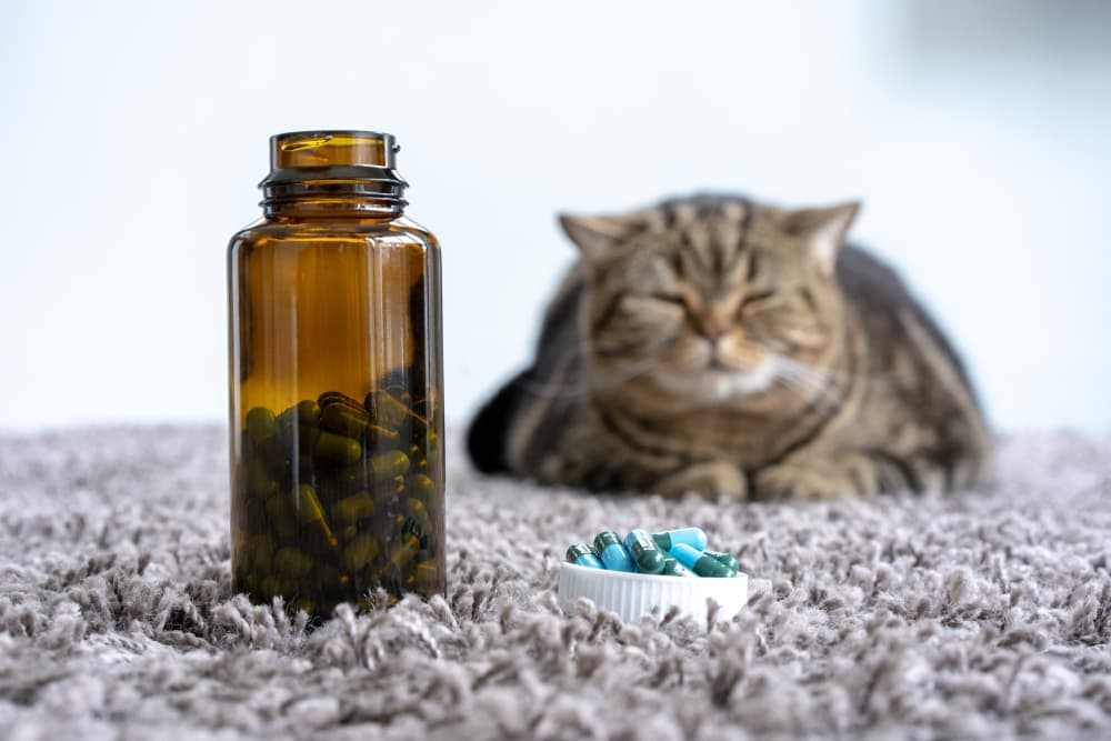Cat sitting with medication