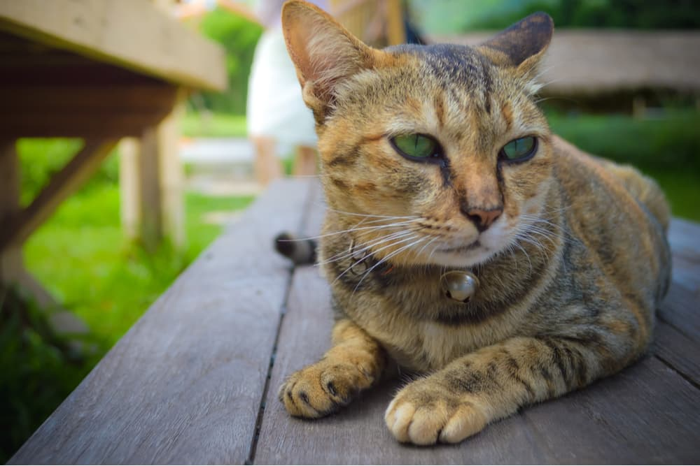 Cat laying on a bench outdoors
