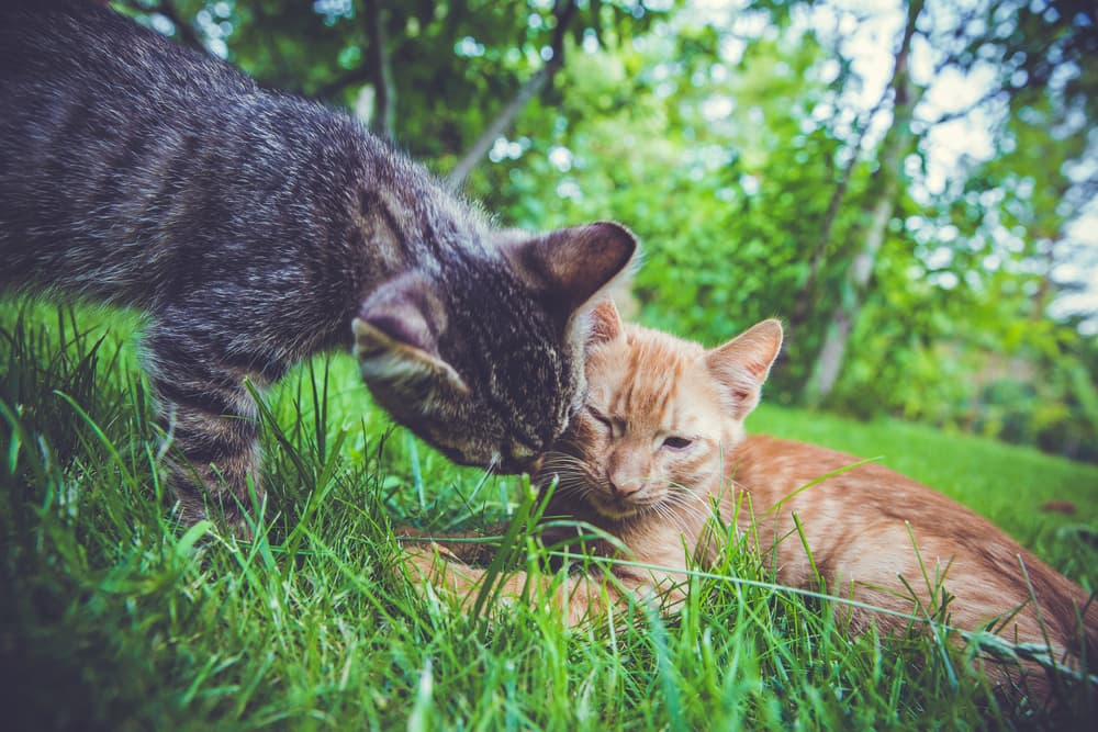 Two cats play fighting
