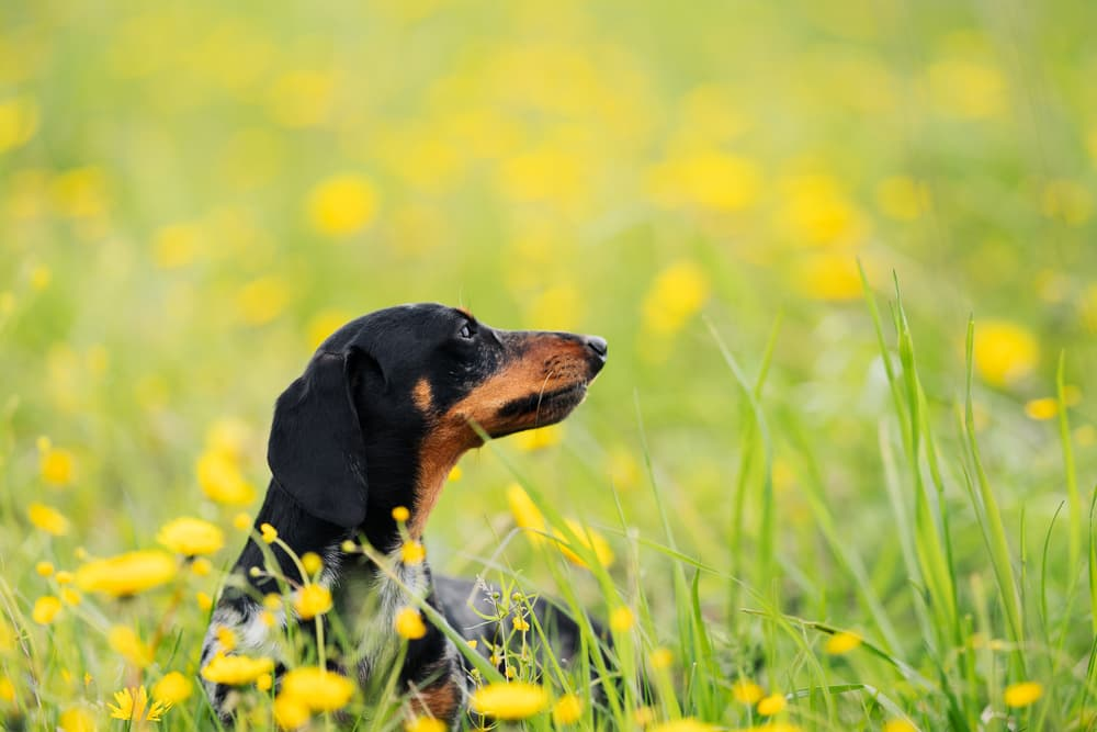 6 Reasons Your Dog Won't Come When Called