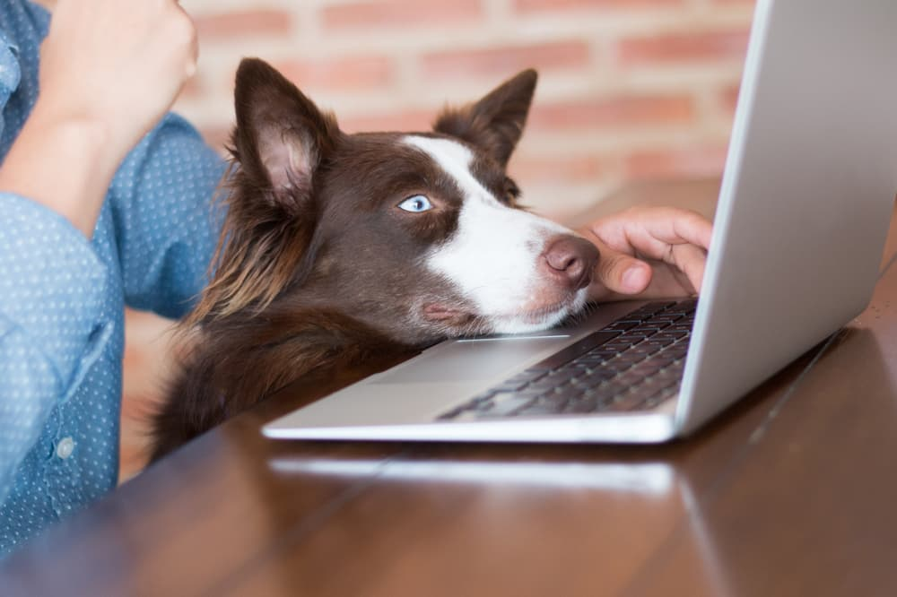 Woman searching for products online with dog's head on laptop