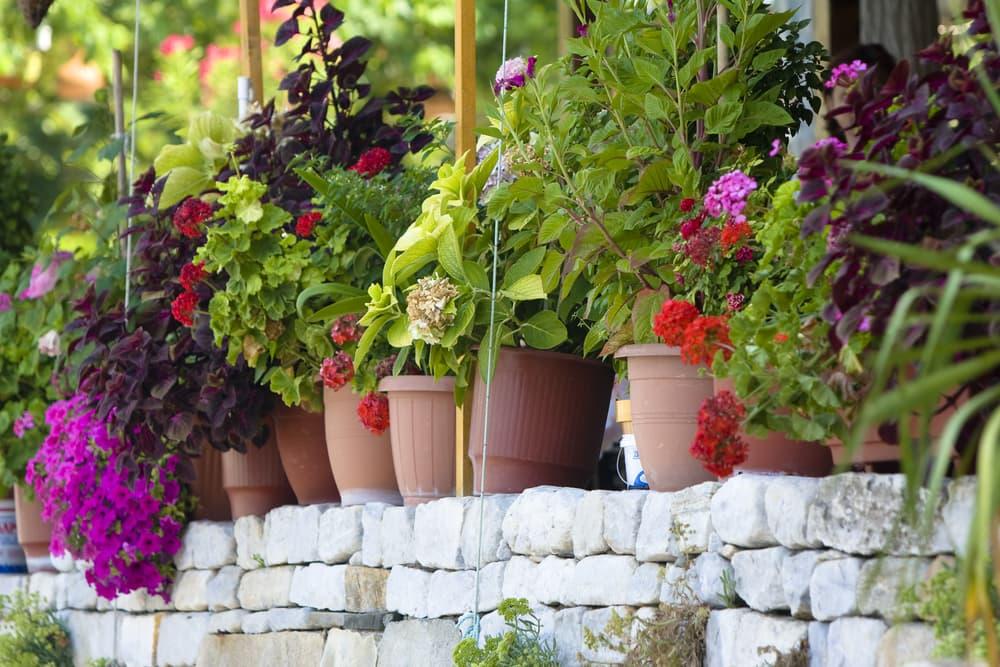 Flower pots in a home garden