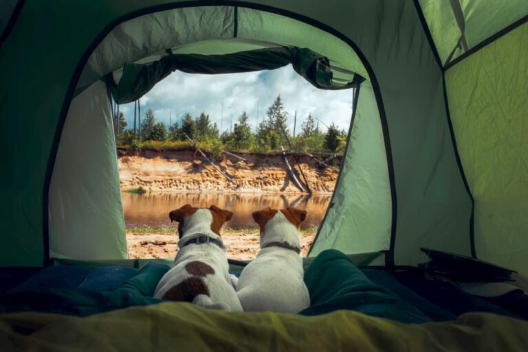 two dogs in tent