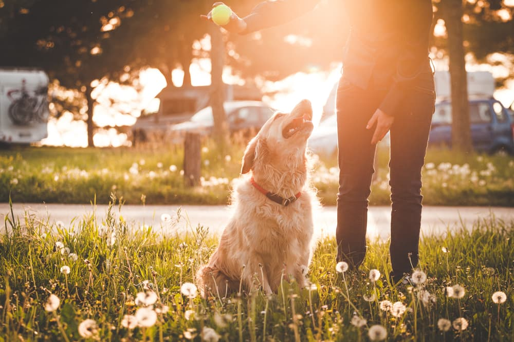 woman with Golden Retriever in park
