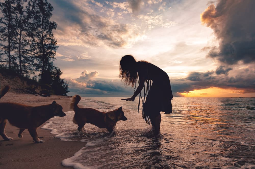 woman plays with dogs on beach
