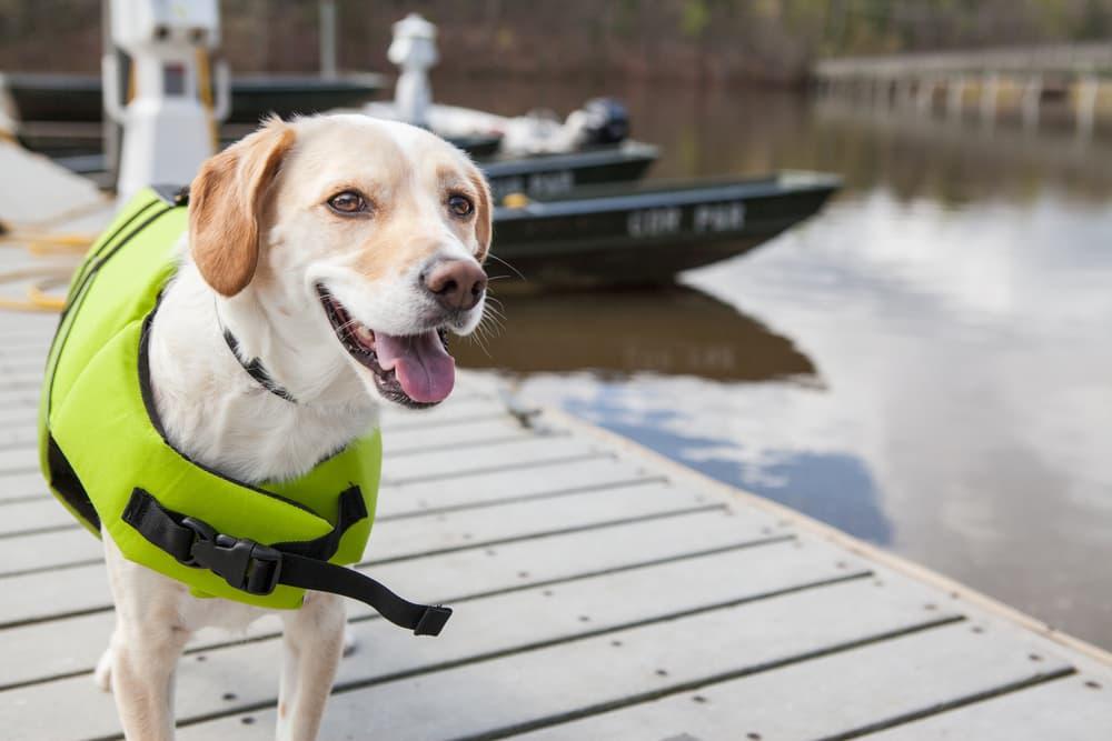7 étapes pour préparer votre chien à la baignade
