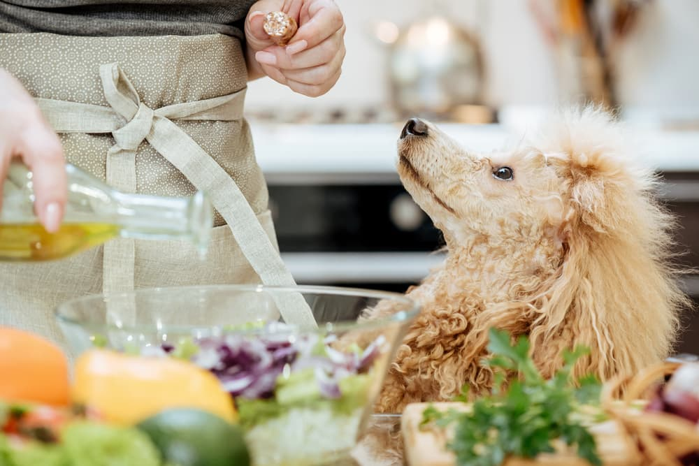 Olive Oil for Dogs: Is It Safe?