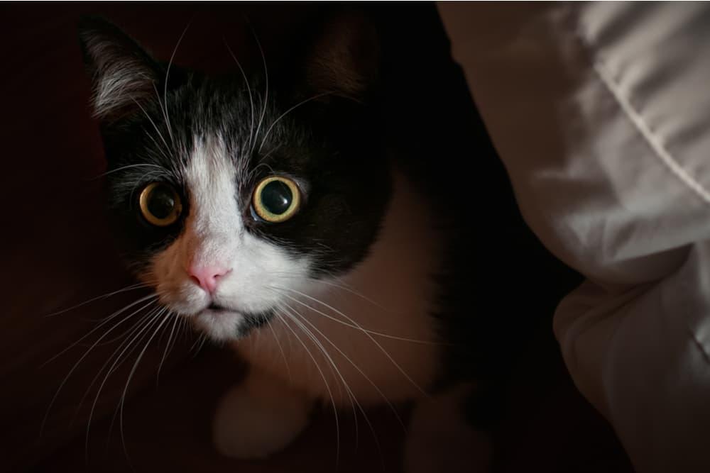 Cat hiding in the dark at night