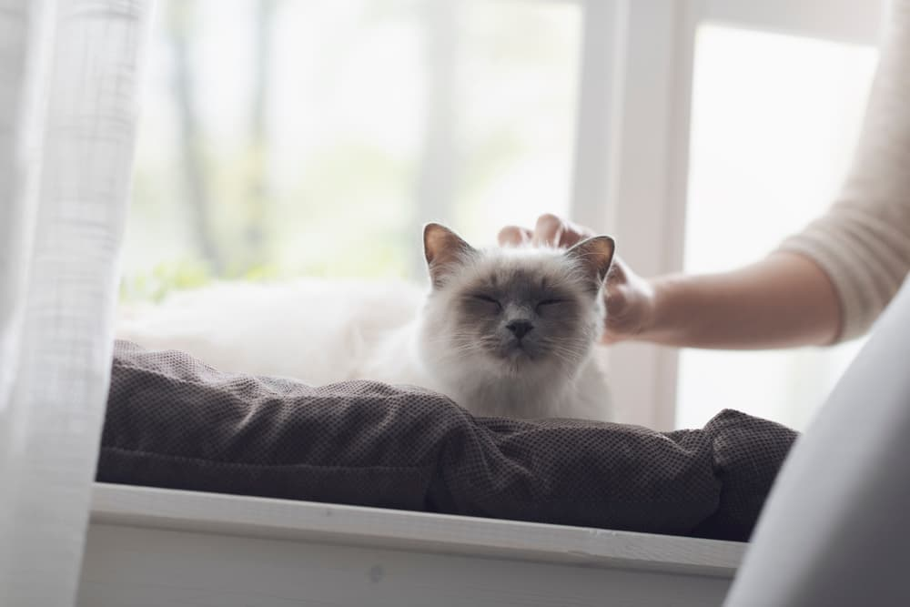 Owner petting cat and saying goodbye