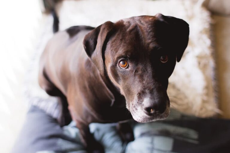 Concerned dog looking at pet owner
