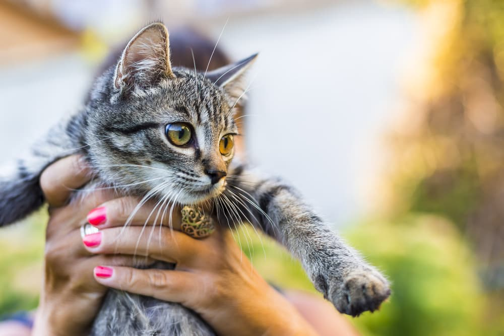 Person holding a cat outside