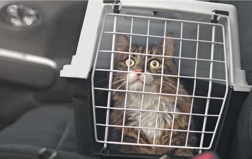 Cat in the car in a carrier