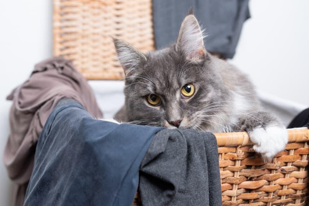 Cat lying in a laundry basket