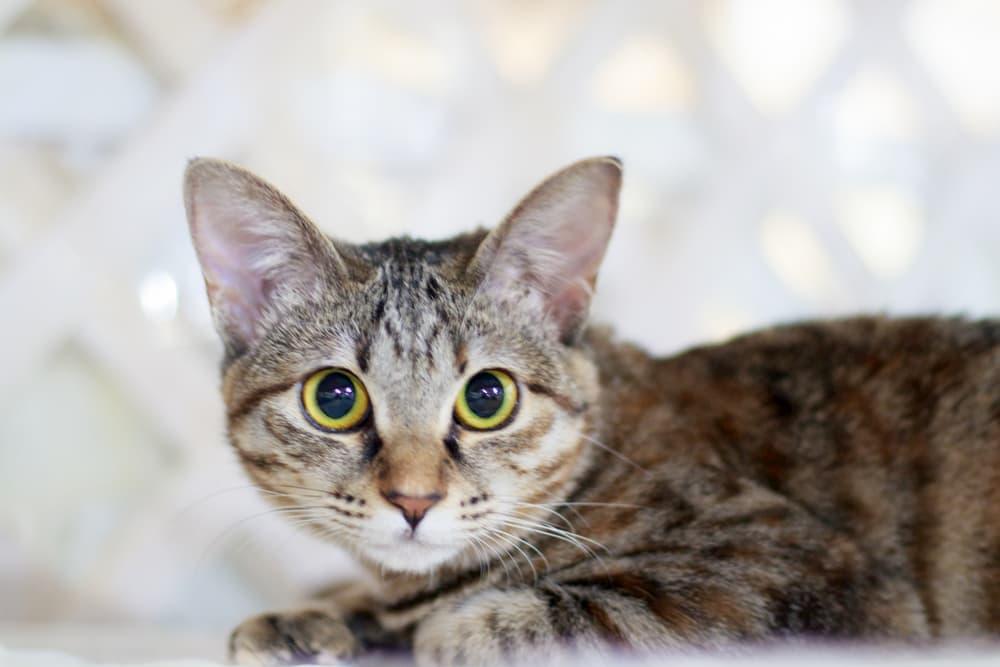 Anxious cat looking at camera