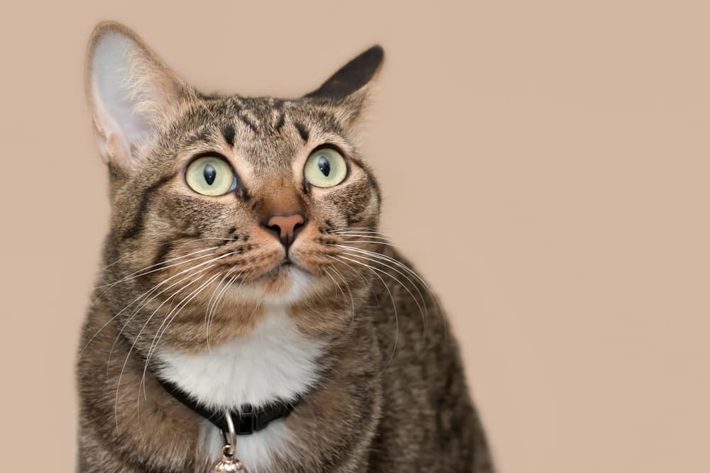Cat looking confused