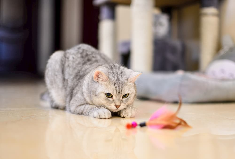 Cat playing with toy on the ground