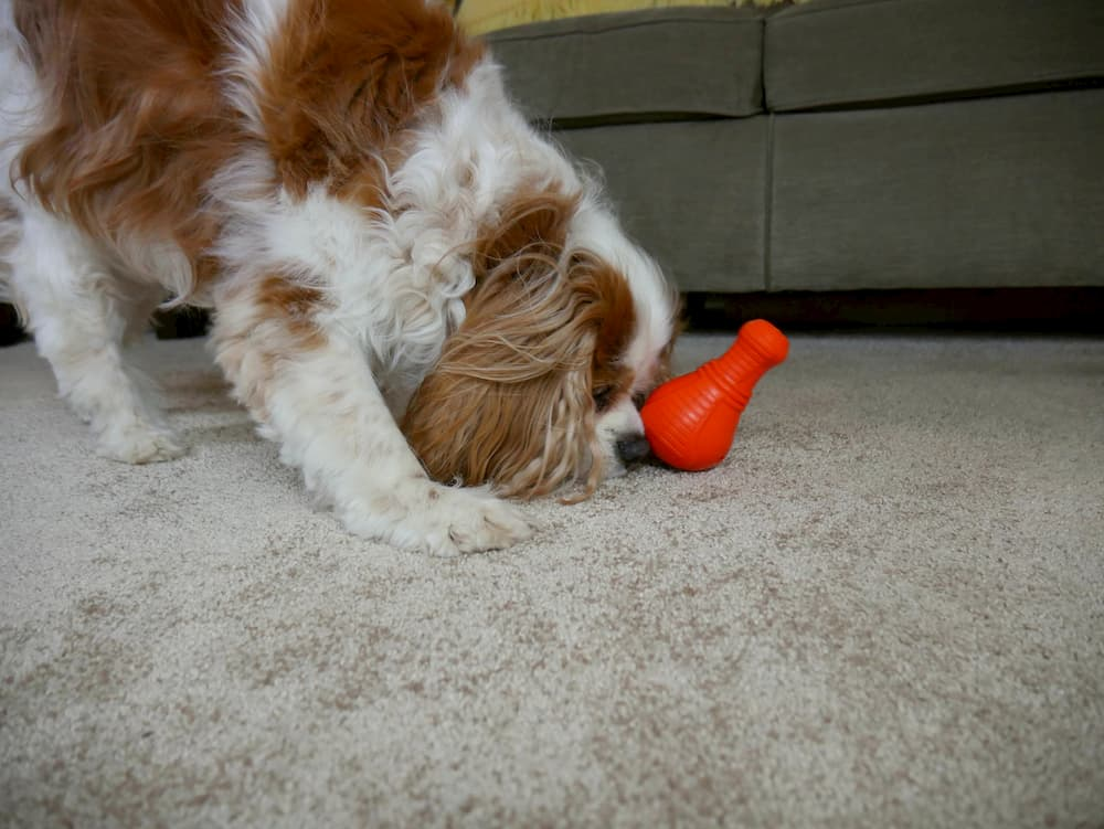 durable dog toy overall winner
