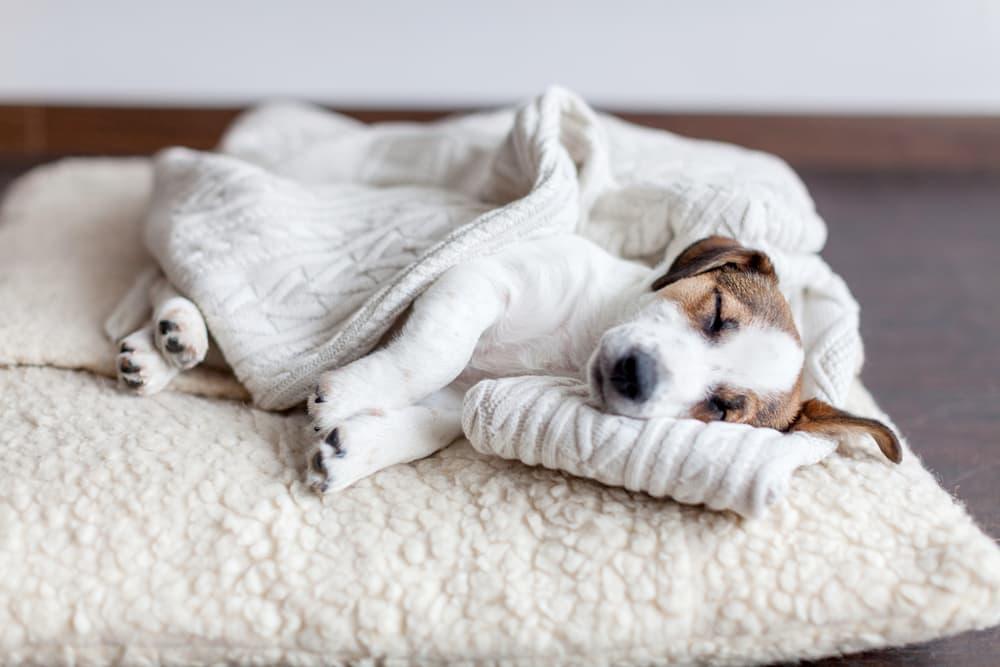 Dog sleeping on dog bed