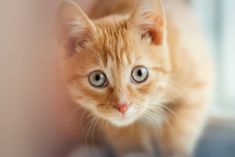 Cat looking up concerned with big wide eyes
