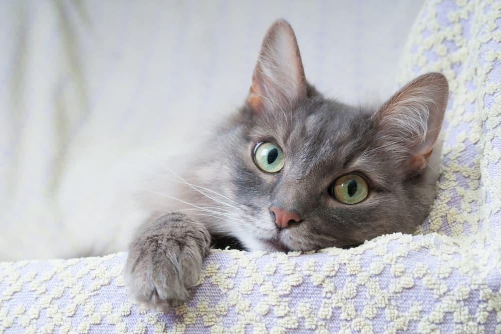 Cat looking sick
