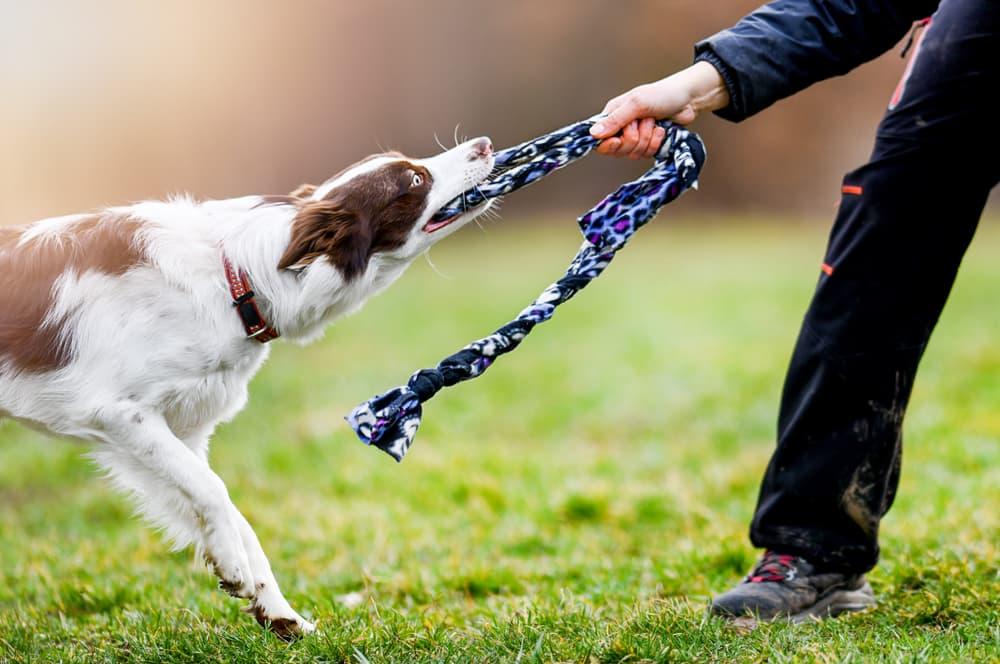 Woman playing tug with dog in yard