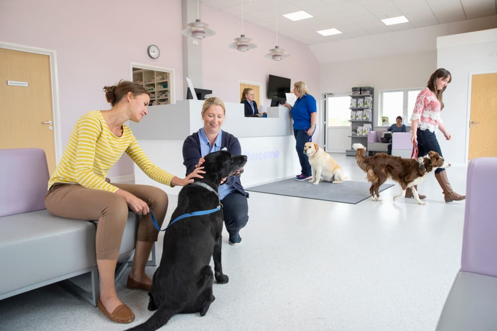 Woman waiting with dog in pet emergency room