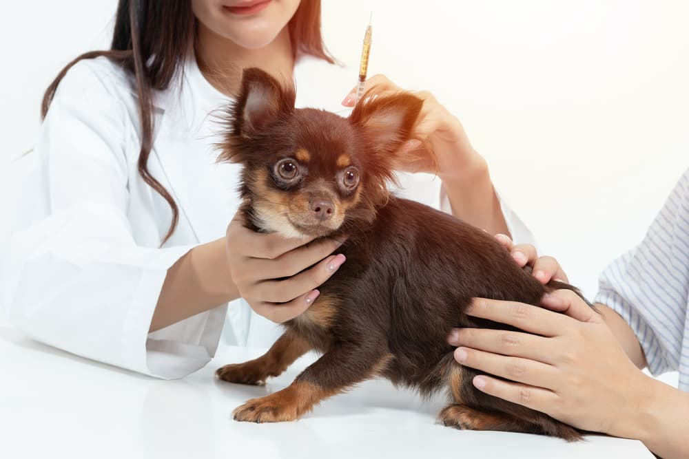 DHPP Vaccine for Dogs