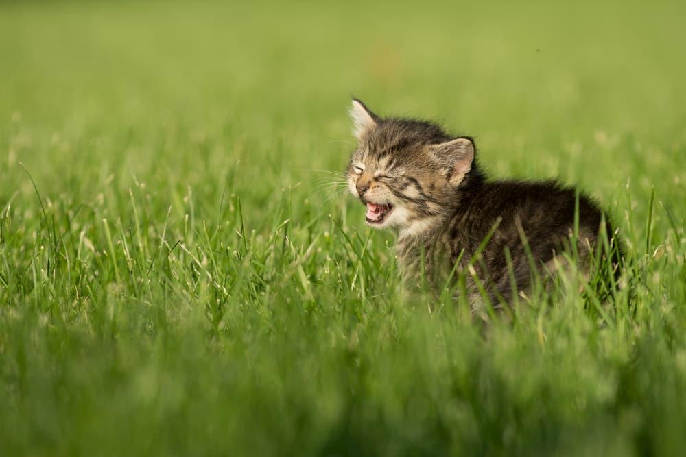 Cat breathing heavily outdoors